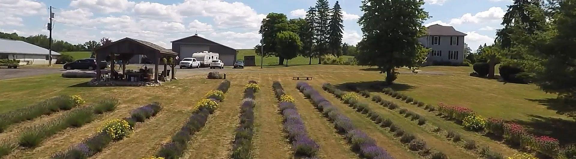 Farm House view